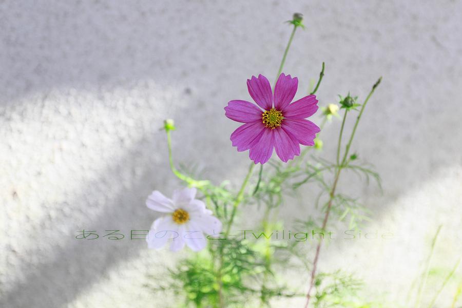 2012_10_19_EOS-1D-Mark-IV_0091.jpg